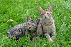 Two kittens on the grass Royalty Free Stock Photo