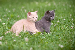 Two kittens in the grass Stock Photography