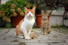 Two kittens. Two homeless kittens sitting and looking in camera Royalty Free Stock Photos