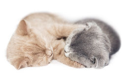 Two kittens hugging sleep Royalty Free Stock Images