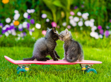 Two kittens kiss. Two kittens on green grass Stock Photos