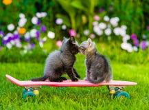 Two kittens kiss stock photos