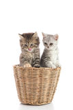 Two kittens licking lips in a basket Royalty Free Stock Photography