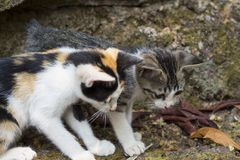 Two kittens look at stick on ground. Homeless kittens play with insect. Playful cat babies. royalty free stock photo