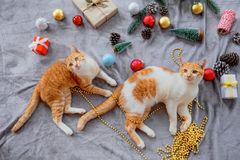 Two kittens look up on gray carpet in christmas holiday with decoration and ornament. Domestic cute cat in winter and sunlight warm royalty free stock images