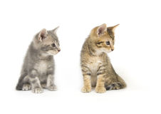 Two kittens looking right Royalty Free Stock Photo