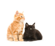 Two kittens looking right Stock Image