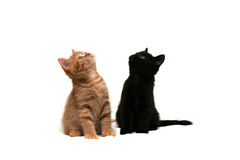 Two kittens looking up. Red and black kitten looking up Stock Photo