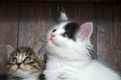 Two kittens looking. At the viewer through the camera Stock Images