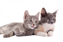 Two Kittens Lying Down Royalty Free Stock Photos