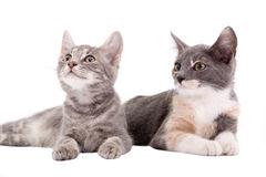 Two Kittens Lying Down Stock Photos