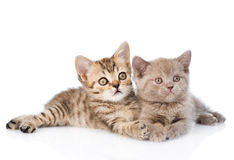 Two kittens lying together. isolated on white background Stock Images