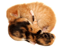 Two kittens lying on white background Stock Photos