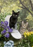 Two kittens and a mailbox Stock Images