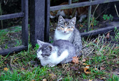 Two kittens in the morning at the fence of the Park. Two colorful kitten in the morning at the fence of the city Park Stock Images