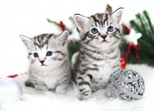 Two kittens new year christmas. Stock Photos