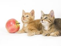 Two kittens next to an apple royalty free stock image