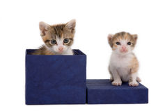 Two Kittens On A Gift Box Stock Photo