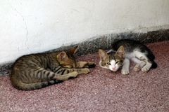 Two Kittens. One sleeping and the other giving the evil eye after being disturbed Stock Photos