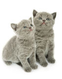 Two kittens over white Stock Image