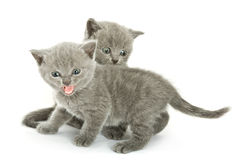 Two kittens over white Royalty Free Stock Photos