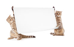 Two kittens with placard or banner Stock Photography
