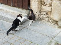 Two kittens playing at the door-step of an old house royalty free stock photo