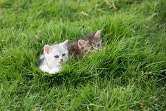 Two kittens playing Stock Photos