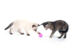 Two kittens playing with pink ball Stock Photography