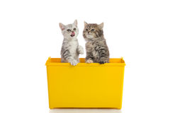 Two kittens playing in yellow box Royalty Free Stock Photos