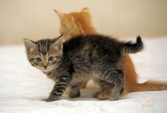 Two kittens Stock Photos