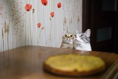 Two kittens sit in front of the table royalty free stock images