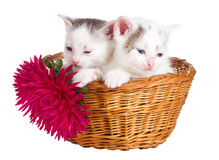 Two kittens sitting in basket Stock Photo