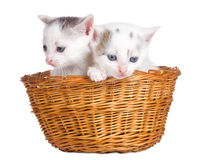 Two kittens sitting in basket Royalty Free Stock Photo