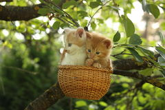 Two kittens sitting in the basket hanging on the tree Stock Photo