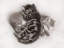 The two kittens sleep, hugging each other. Kittens are friends_. The two kittens sleep, hugging each other. Kittens are friends Stock Photo