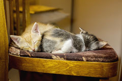 Two kittens sleeping on a chair. age 1 month Stock Photos