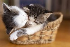 Two kittens sleeping stock photo