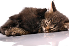 Two kittens sleeping together Stock Photo