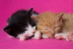 Two kittens slleping together Royalty Free Stock Image