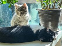 Two kittens in the sun. Two little kittens sunning themselves on the balcony.One is lying on the back and the other is sitting on the front Royalty Free Stock Image