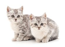 Two kittens. Two small kittens on a white background Stock Photos