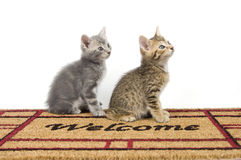 Two kittens on a welcome mat Stock Image