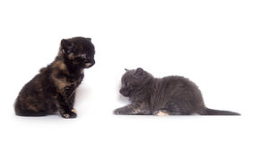 Two kittens on white Stock Photos