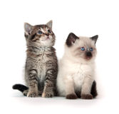 Two kittens on white background Royalty Free Stock Photos