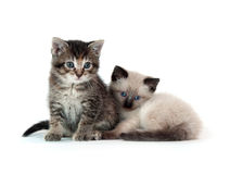 Two kittens on white background Stock Photo