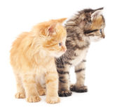 Two kittens. Stock Photo