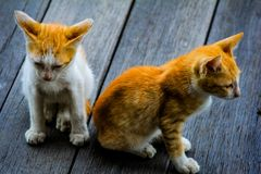 two kittens who lived by his mother. stock photo