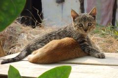 Two Kittens Wrestle Stock Image