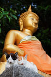 Two kitties and golden Buddha Stock Photography